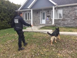 chien renifleur devant maison